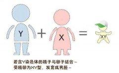 二胎宝妈告诉你生男生女症状,怀男怀女大不同